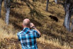 Mammutbaum nationales Park Lizenzfreies Stockfoto