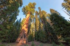 Mammutbaum-Nationalpark in Kalifornien lizenzfreie stockfotografie