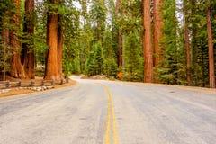 Mammutbaum-Nationalparkstraße Kalifornien, Vereinigte Staaten lizenzfreies stockbild