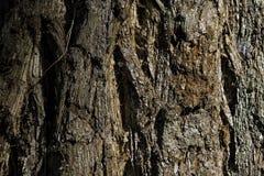 Mammutbaumhaut Lizenzfreie Stockbilder