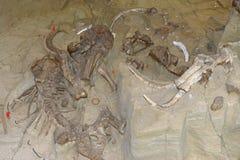 Mammutgrabungsstandort in South Dakota stockbilder