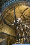 Mammutknochen Lizenzfreie Stockbilder