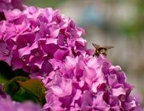 Mamrocze pszczoły dno fotografia royalty free