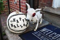 Mamusia pies i bania na krokach przy dzwi wejściowy Halloweenowe ganek frontowy dekoracje obrazy royalty free
