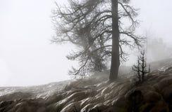 Mamuta krajobraz Obraz Royalty Free