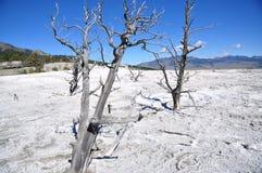 Mamutowe gorące wiosny Fotografia Stock