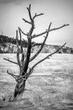 Mamutowe gorące wiosny Zdjęcia Stock