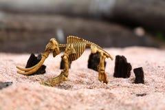 Mamutowy kościec na piasku Obrazy Stock