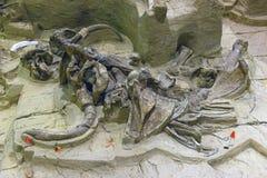 Mamutowy wykopaliska miejsce w Południowym Dakota Fotografia Stock