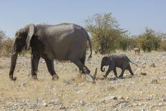 Mamy i dziecka słoń, Namibia Zdjęcie Royalty Free