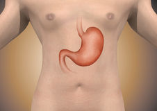 Man with abdomen shows. Man with abdominal stomach exposing show Vector Illustration