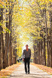 Man on alley in fall forest Stock Photo