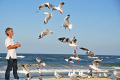 A Man alone on the beach feeding seagulls by hand. Royalty Free Stock Photography