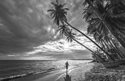 The man alone go to the end of tropical beach with coconut palm trees Royalty Free Stock Photo