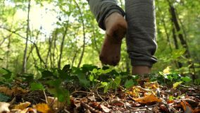 Alone man in woods walking in slow motion. Man alone walking barefoot in woods. Walking with no shoes on soil and grass stock video footage