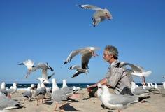Man alone on white sand beach feeding birds Royalty Free Stock Photos