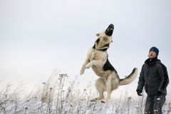 Man and Alsatian dog Stock Photography