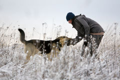 Man and Alsatian dog. Man playing with Alsatian dog at winter field stock photo
