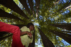 Man amongst the redwoods Stock Photos