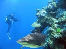 Man&Shark Photographie stock libre de droits