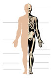 Man anatomy Stock Images