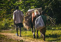Free Man And Boy Accompany Horse With Goods Along Road In Rural Haiti. Stock Photography - 144826502