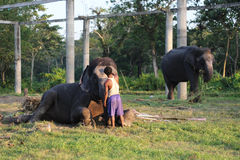 Man and animal. Master and servant. Elephant with man. 15th October, 2016, Jaldapara, West Bengal, India - Man and animal. Master and servant. Elephant with man Royalty Free Stock Image