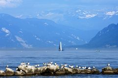 Man and animal in mountain décor and Lake Geneva. Switzerland, city Morges, Swiss canton Vaud: this place is situated at the lake Geneva at the bank, side, of Royalty Free Stock Images