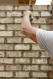 Man applying mortar Stock Images