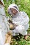 Man applying smoke to bee hive. Man royalty free stock photos