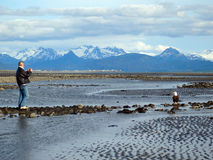 A man approaching an eagle at homer spit. Taking pictures of alaskan wildlife at low tide Stock Photography