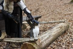 Armor. A man in armor in the woods stroking a cat, strength and tendernesst Stock Image
