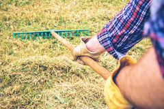 Man arms raking hay with pitchfork on field Royalty Free Stock Photo