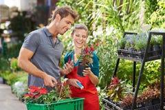 Man as customer in garden center. Talking with gardener royalty free stock photo