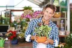 Man as gardener in nursery shop. Happy smiling man as gardener in a nursery shop with peperomia magnofolia plant stock image