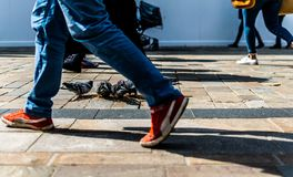 Man aside pigeons on the high street England. Feet close up great scene with shadows royalty free stock photography