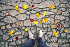 Man on asphalt road in front of the colorful autumn leaves Stock Images