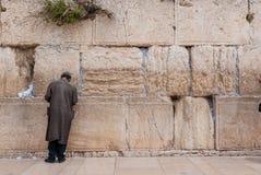 Man att be på den västra väggen, Jerusalem, Israel Royaltyfri Bild