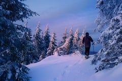 Man att fotvandra i härlig vinterskog på solnedgången Arkivfoto