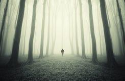Man att gå i en mystisk symmetrisk skog med dimma Royaltyfri Bild