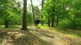Man att gå med ryggsäcken till och med den lilla banan för skogen i trä arkivfilmer