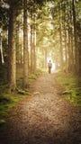 Man att gå upp banan in mot ljuset i magisk skog fotografering för bildbyråer