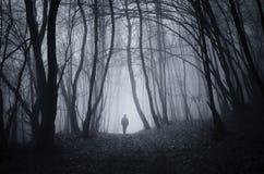 Man att gå i mystisk skog för allhelgonaafton med dimma Arkivbild