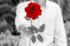 Man att ge sig röda rosor med svartvit colorizing Arkivbilder