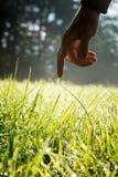 Man att nå som trycker på nytt grönt solbelyst gräs Arkivfoto
