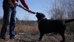 Man att spela med en pinne på gatan med en stor svart hund i solen mot en bakgrund av gult gräs 4K arkivfilmer