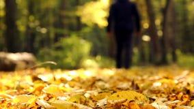 Man in autumn park.Feet walking on autumn leaves.Walk in the autumn park, forest. stock video