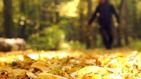 Man in autumn park.Feet walking on autumn leaves.Walk in the autumn park, forest. stock footage