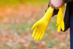 A man in an autumn park puts on rubber gloves, on his hand, for harvesting leaves. A man in an autumn park, in the open air, puts on rubber, yellow gloves on his stock images