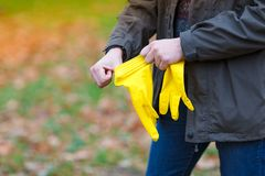 A man in an autumn park puts on rubber gloves for harvesting leaves. A man in the autumn park, in the open air, puts on rubber, yellow gloves to harvest the royalty free stock photography